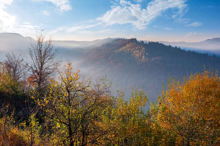 autumnal scenery with fog in the valley at sunrise. mountain landscape in morning light. trees in colorful foliage on the hill. wonderful sunny weather with clouds on the sky
