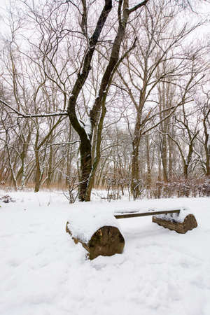 wooden bench in snow. moody winter scenery with leafless trees in the city park Stock Photo