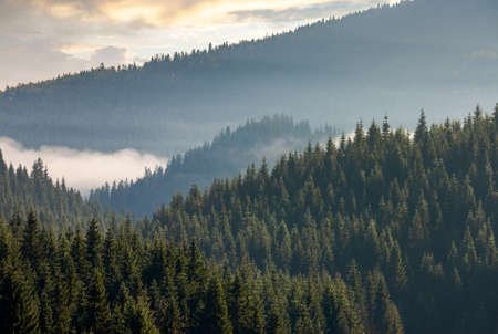 misty valley scenery at sunrise. beautiful nature background with coniferous trees in fog. mountain landscape of romania in autumn season Stock Photo