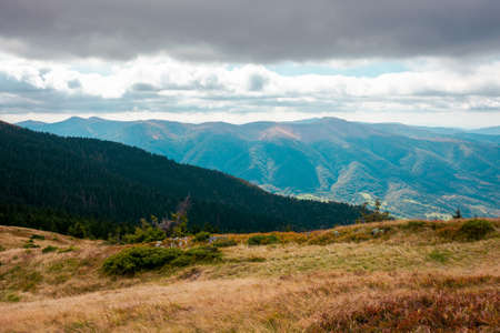 carpathian mountain landscape in early autumn. colorful scenery of mt. strymba, ukraine. svydovets ridge in the distance beneath a cloudy sky. popular travel destination Stock Photo