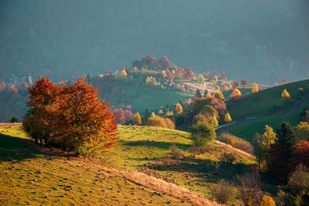 countryside rural landscape in autumn. trees in colorful foliage on rolling hills. hazy scenery in morning light. nature beauty of carpathian mountains