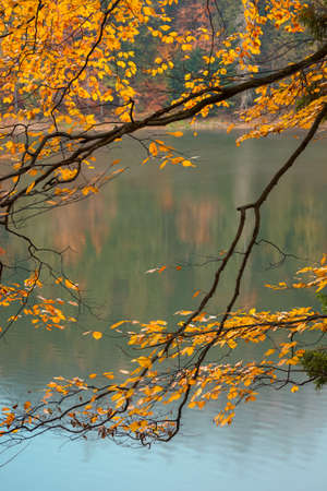 foliage in fall colors on the branches. blurred nature background with forest on the shore of a lake. mysterious foggy weather.