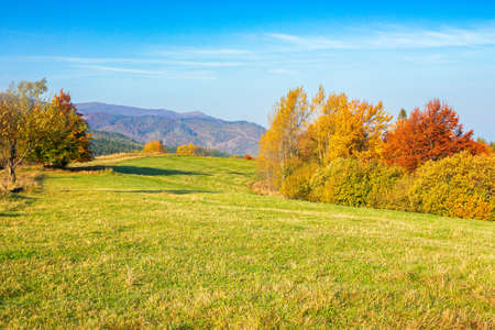 autumnal countryside scenery in mountains. trees in colorful foliage on the grassy meadows. hills rolling in to the distance. wonderful environment of carpathians in fall season on a sunny day Stock Photo