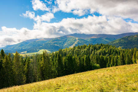 mountain landscape in early autumn. spruce forest on the hills. wonderful nature scenery in dappled light. clouds on the sky Stock Photo