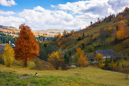 rural landscape in autumn. beautiful scenery with hills, meadows and mountain ridge in the distance. sunny weather with clouds on the sky Stock Photo