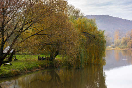 willow tree on the river bank. cloudy autumn day in mountains. beautiful countryside outdoors. reflections in the water