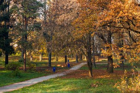 city park on a sunny autumn morning. walkway among trees in orange foliage