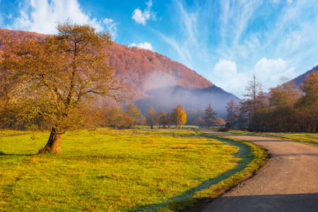 countryside road through rural valley. beautiful mountain landscape on a foggy morning. tree on the grassy pasture. colorful nature scenery with bright sky Stock Photo