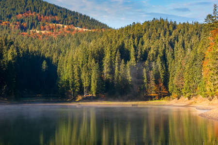 landscape at the mountain lake in autumn. beautiful nature scenery in the morning. spruce forest on the shore. synevyr national park, ukraine Stock Photo
