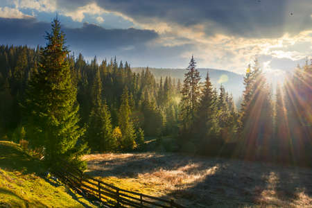 countryside landscape with spruce forest in the valley. wonderful outdoor nature background at sunrise in autumn season