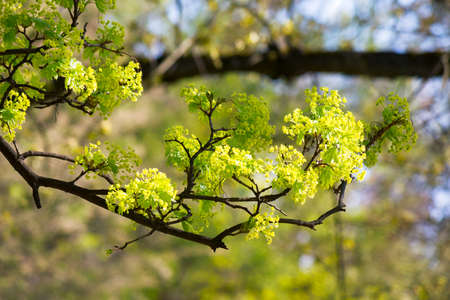 green plant in blossoming garden. beautiful nature background on a sunny springtime day Stock Photo