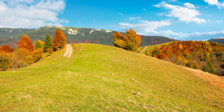 carpathian rural landscape in autumn. beautiful mountainous scenery in evening light. trees in colorful foliage on a grassy hills Stock Photo