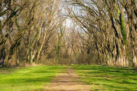 leafless trees in the park. green grass on the ground. nature scenery in early springtime. bright sunny weather in the afternoon light