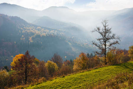 mountainous countryside landscape in autumn. trees on the hill in colorful foliage. beautiful nature scenery in the morning