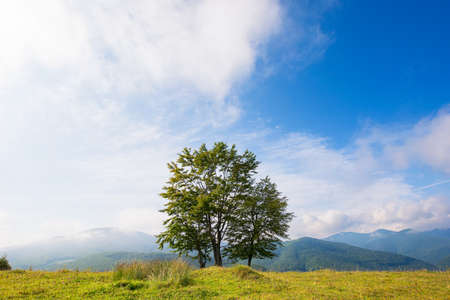 trees on the grassy hill. beautiful early autumn landscape in mountains. sunny morning with fluffy clouds on the blue sky Stock Photo