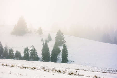 countryside winter scenery on a misty morning. coniferous trees on snow covered hills. mysterious atmosphere Stock Photo