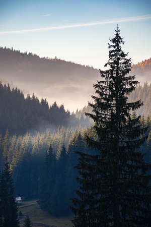 coniferous forest of apuseni natural park. beautiful mountain landscape in autumn