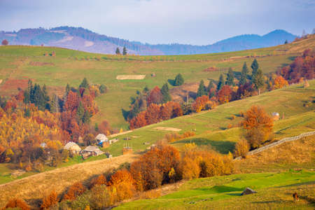 morning rural scenery in autumn season. landscape with rolling hills, grassy fields and trees in colorful foliage. bright sunny weather Stock Photo