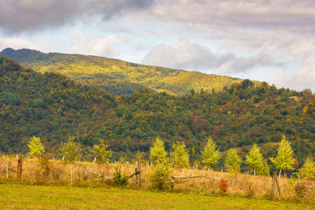 grassy meadow on the hill. colorful countryside landscape with forested mountains in autumn. cloudy weather Stock Photo