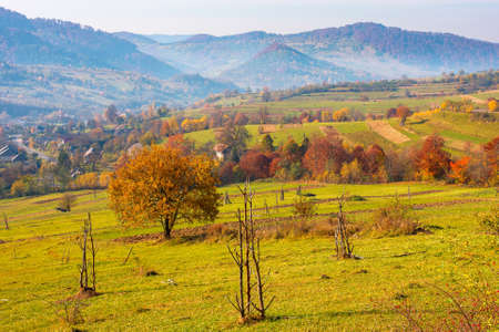 trees in colorful foliage on the rural fields. beautiful countryside landscape with grassy rolling hills of carpathian mountains in autumn. hazy atmosphere in the distant valley Stock Photo