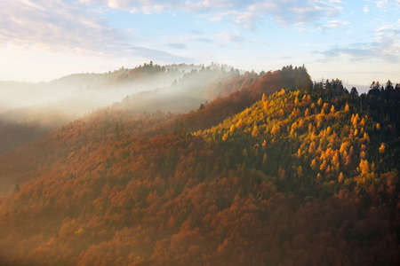 mountain nature background. scenic foggy weather. trees in colorful foliage on the hills Stock Photo