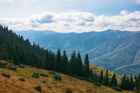 beautiful landscape of carpathian mountains. coniferous trees on the steep grassy hills. beautiful nature background Stock Photo