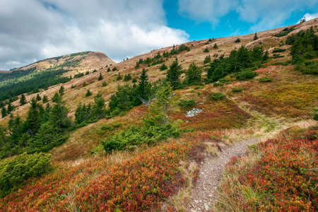 path to the peak in dappled light. beautiful autumn landscape in mountains with colorful meadows on the hillside. clouds on a blue sky above the ridge