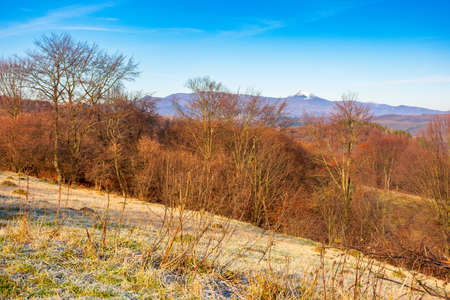 countryside landscape in autumn on a sunny morning. beautiful outdoor nature scenery with trees in fall foliage. ridge with snow covered peak in the distance. blue sky with fluffy clouds Stock Photo