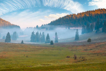 mountain landscape on a foggy autumn morning. coniferous trees on the grassy meadow in the valley. glowing clouds on the sky. apuseni natural park, romania