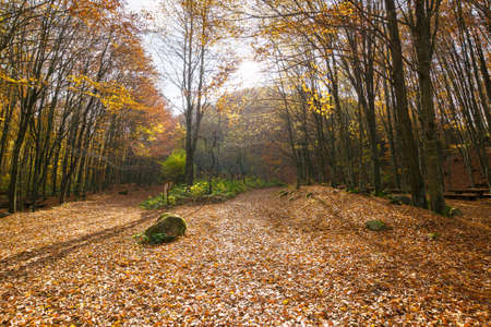 autumn scenery in the park. trees in fall foliage. beautiful landscape in mountains on a sunny day