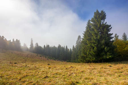 coniferous forest on the hill. nature scenery on a bright foggy morning. beautiful mountain landscape in autumn with clouds on the sky Stock Photo