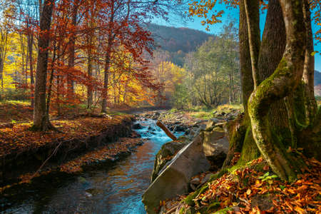 mountain river in the autumn forest. wonderful nature scenery in morning light. trees in colorful foliage and stones on the shore covered in fallen leaves. water flows down in the ravine