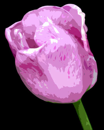 Isolated cutout illustration of a lavender tulip on black