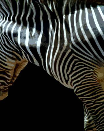 Isolated photo illustration on black of a zebra emphasizing stripes