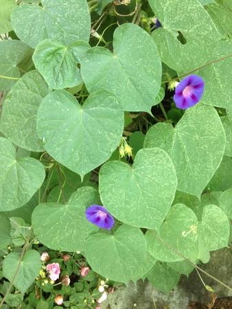 small purple flower: small purple flower plant