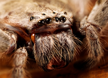closeup of huntsman spider Stock Photo