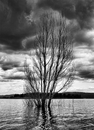 looming: a tree submerged in a lake with dark clouds looming