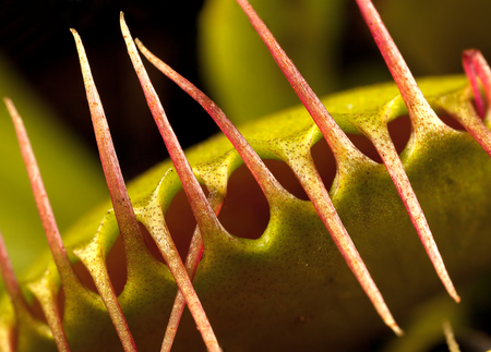 a venus flytrap closed photo