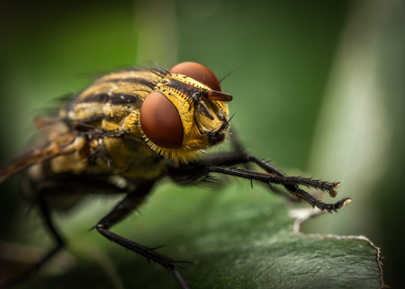 fly with otange eyes on a green leafy background