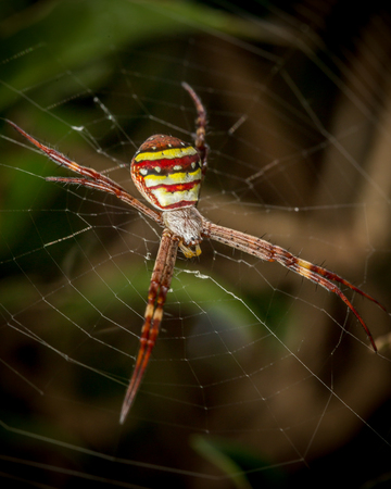 andrews: a st andrews spider on a web Stock Photo