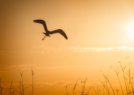 a crane in flight in silohouette