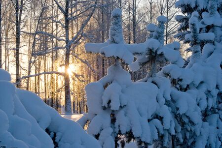 gold evening winter sun and blue snow photo