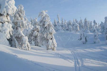ski tracks photo