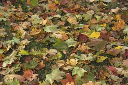 the road surface: Autumn Carpet of colorful leaves