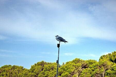 spar: Saddleback on Mast with Trees and Blue Sky Behind. Stock Photo