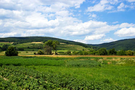 forested: Vineyards on Forested Hills with Vegetable Garden in Front