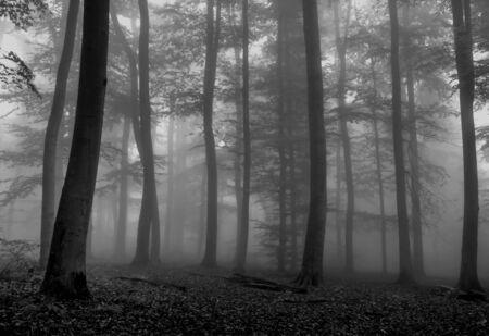 fog forest: Foggy Forest in Fall Season