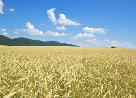 forested: Cropfield with Forested Hills in Distance