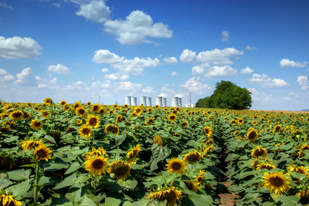 powerplant: Atomic Power Plant with Sunflower Field