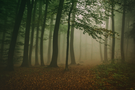 gaseous: Morning Fog in Autumn Forest